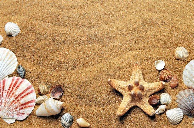 Первым из европейцев увидел воды тихого океана